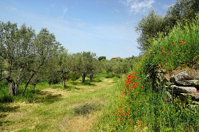 Nawadnianie trawnika – co warto wiedzieć